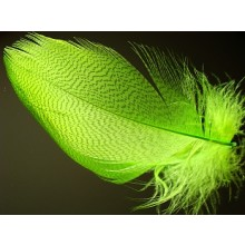 Mallard Barred Flank-large select-fluo chartreuse